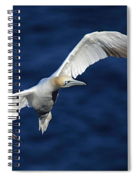 Northern Gannet In Flight Spiral Notebook