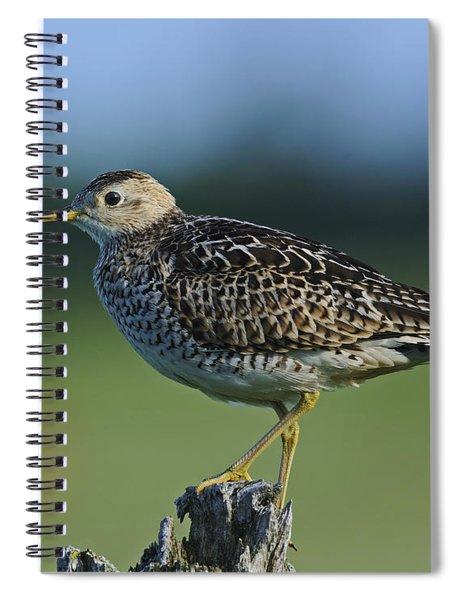 Upland Sandpiper.. Spiral Notebook