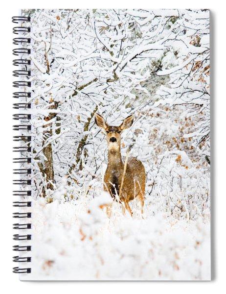 Doe Mule Deer In Snow Spiral Notebook
