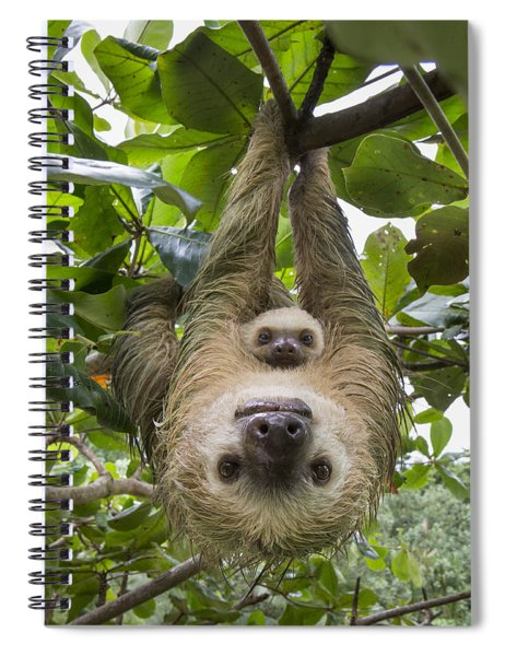 Hoffmanns Two-toed Sloth And Old Baby Spiral Notebook by Suzi Eszterhas