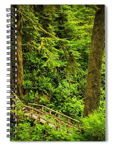 Path In Temperate Rainforest Spiral Notebook