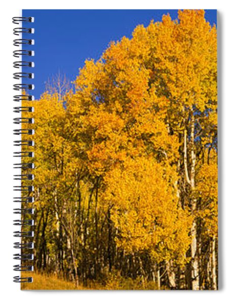 Low Angle View Of Aspen Trees Spiral Notebook