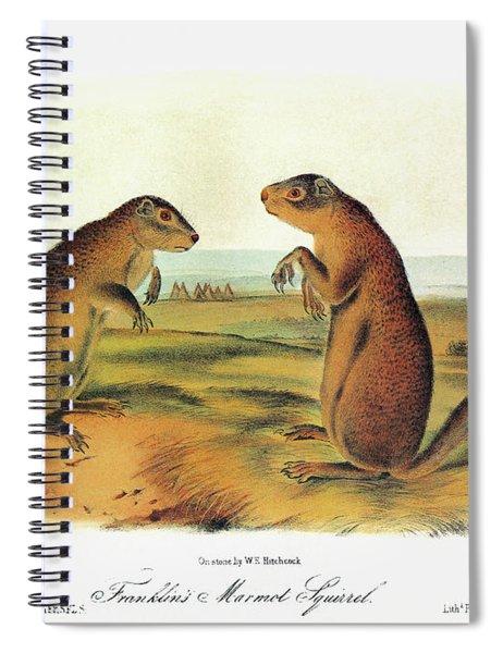 Audubon Squirrel Spiral Notebook