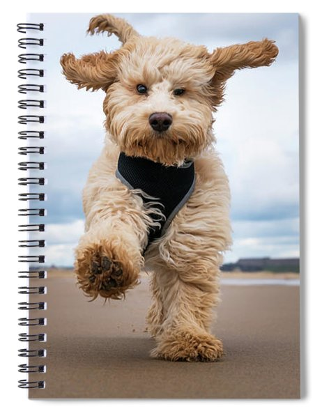 A Cockapoo Running Towards The Camera Spiral Notebook
