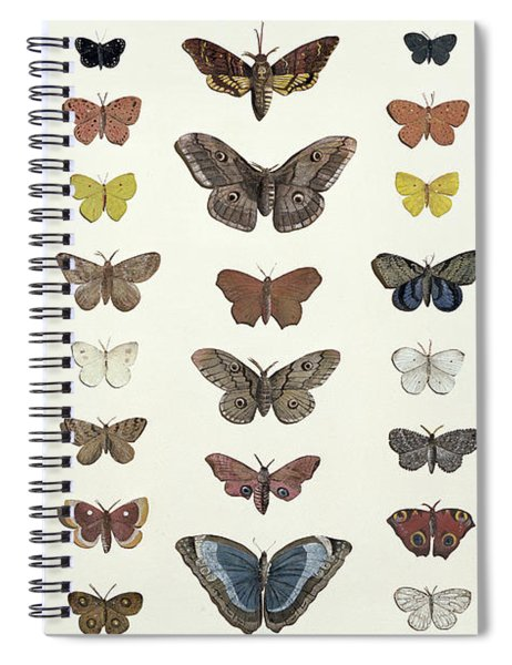 A Collage Of Butterflies And Moths Spiral Notebook