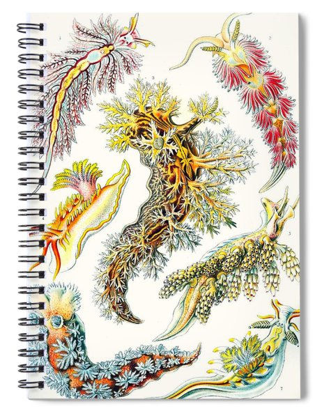 A Collection Of Nudibranchia Spiral Notebook