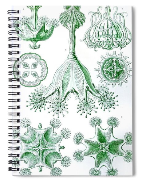 A Collection Of Stauromedusae Spiral Notebook