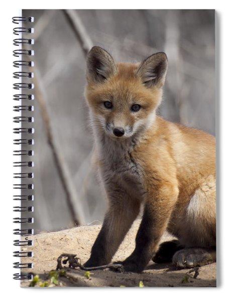 A Cute Kit Fox Portrait 1 Spiral Notebook