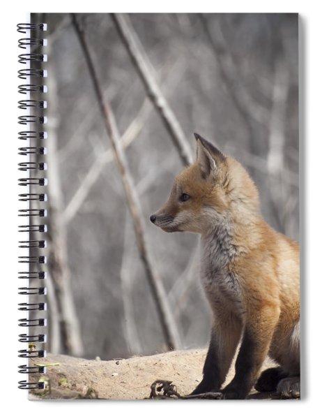 A Cute Kit Fox Portrait 2 Spiral Notebook