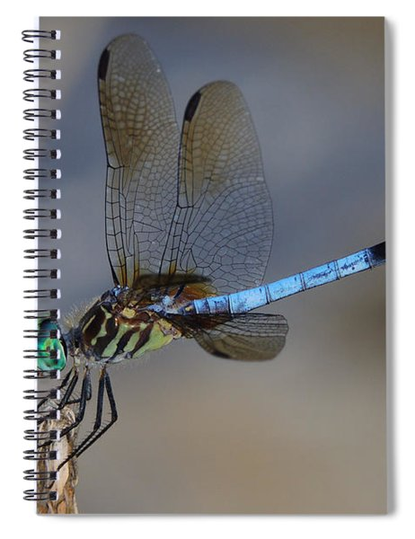 A Dragonfly Iv Spiral Notebook