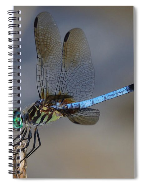 A Dragonfly Iv Spiral Notebook
