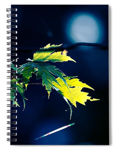 A Few Leaves In The Sun Two Spiral Notebook