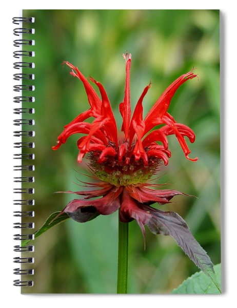 A Flowering Red Castle Beauty Spiral Notebook