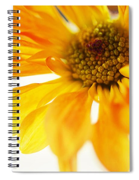 A Little Bit Sun In The Cold Time Spiral Notebook