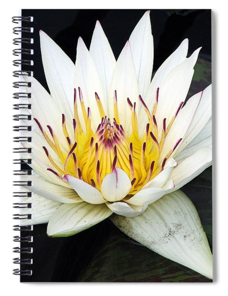 Botanical Beauty Spiral Notebook