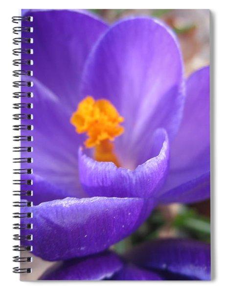 Springjoy Spiral Notebook