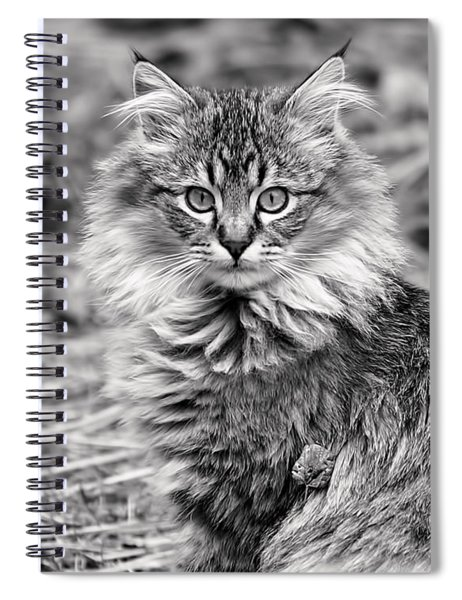 A Young Maine Coon Spiral Notebook