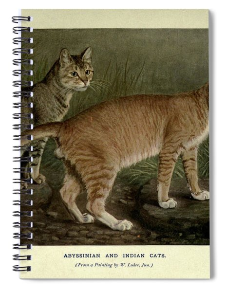 Abyssinian And Indian Cats Spiral Notebook