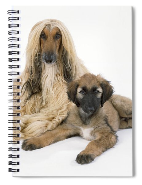 Afghan Hound And Puppy Dog Spiral Notebook