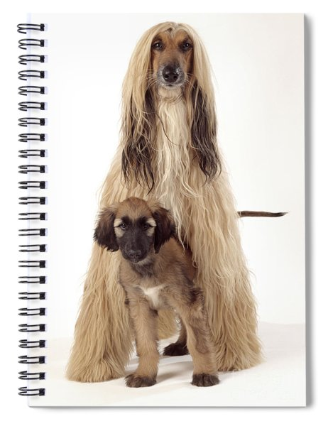 Afghan Hound And Puppy Spiral Notebook