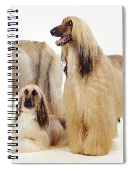 Afghan Hounds Spiral Notebook