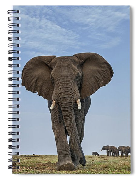 African Elephant Female On Defensive Spiral Notebook