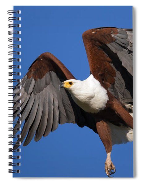 African Fish Eagle Spiral Notebook