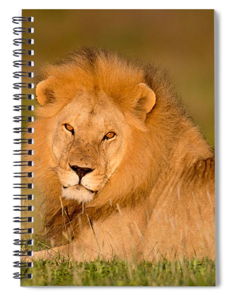 African Lion Panthera Leo, Ndutu Spiral Notebook