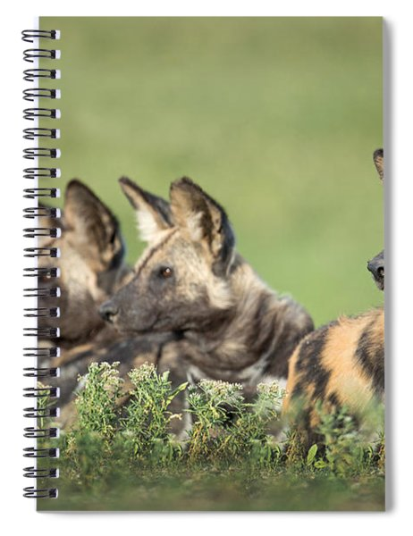 African Wild Dogs Lycaon Pictus Spiral Notebook