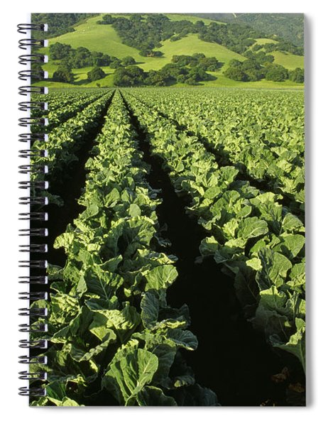 Agriculture - Mid Growth Cauliflower Spiral Notebook