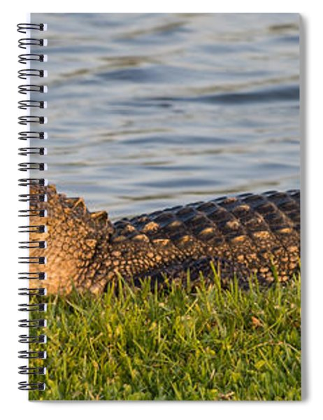 Spiral Notebook featuring the photograph Alligator Smile by Ed Gleichman