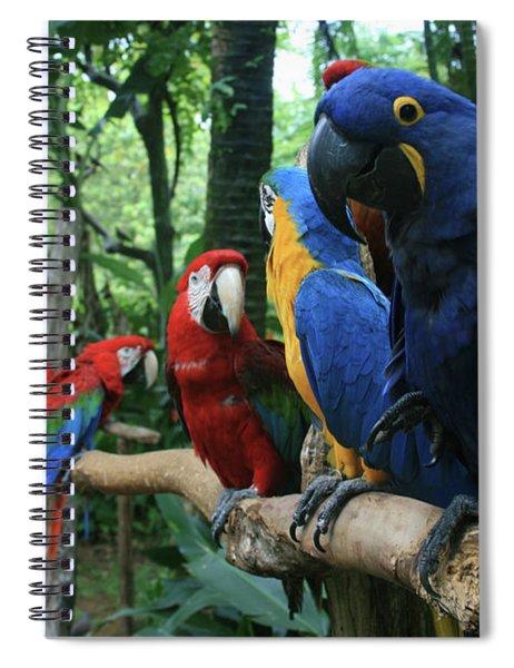Aloha Kaua Aloha Mai No Aloha Aku Beautiful Macaw Spiral Notebook