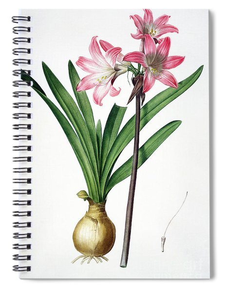 Amaryllis Belladonna From Les Liliacees Engraved By De Gouy Spiral Notebook