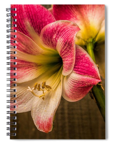 Amaryllis Blooms Spiral Notebook