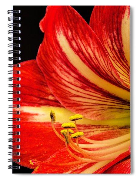 Amaryllis Pollen Spiral Notebook