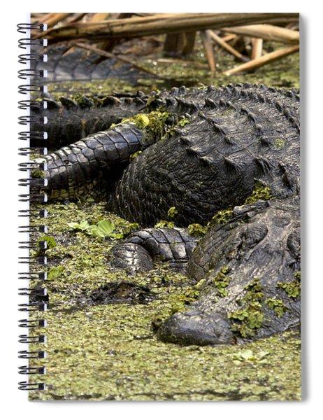 American Alligator Smile Spiral Notebook