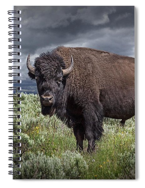 American Buffalo Or Bison In Yellowstone Spiral Notebook