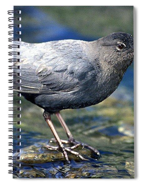 American Dipper Spiral Notebook
