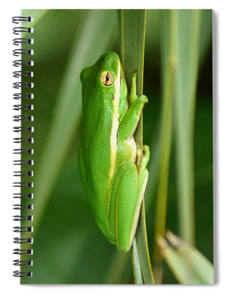 American Green Tree Frog Spiral Notebook