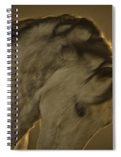 Americano 2 Spiral Notebook