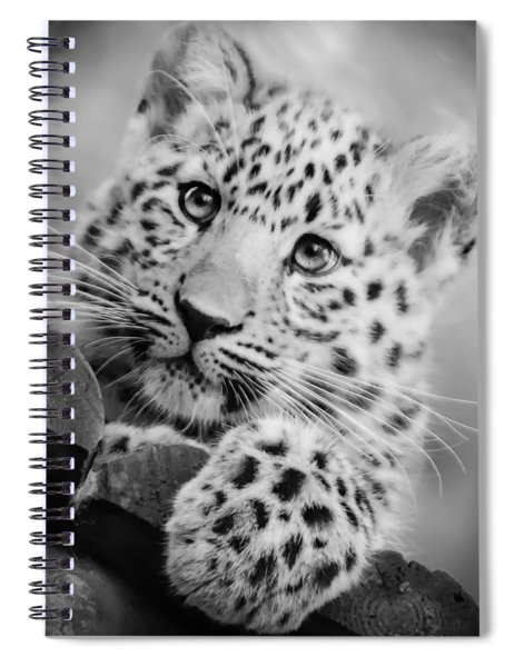 Amur Leopard Cub Portrait Spiral Notebook
