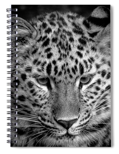 Amur Leopard In Black And White Spiral Notebook