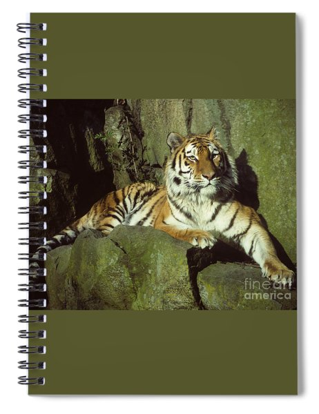 Amur Tiger Spiral Notebook