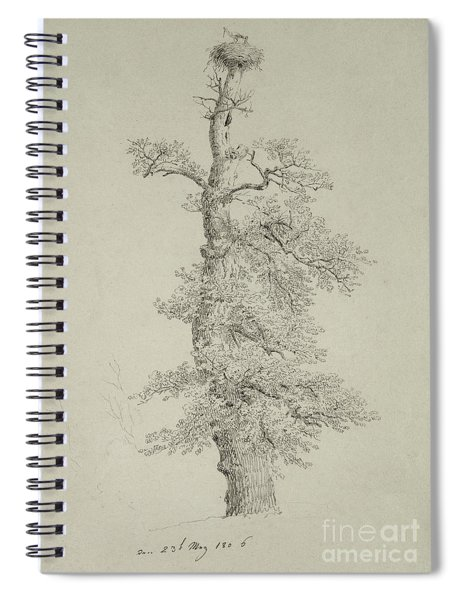 Ancient Oak Tree With A Storks Nest Spiral Notebook