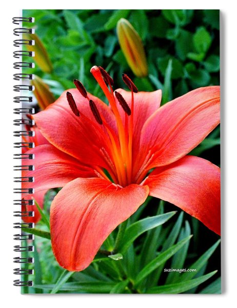 Andrea's Lily Spiral Notebook