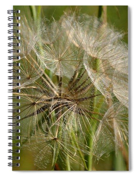 Spiral Notebook featuring the photograph Angel Petals by Scott Lyons
