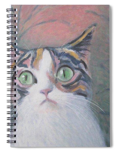 Anguish Of A Cat Spiral Notebook