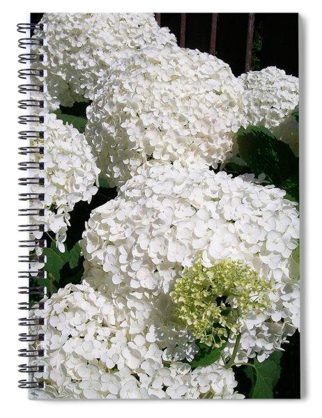 Annabelle Hydrangea  Spiral Notebook