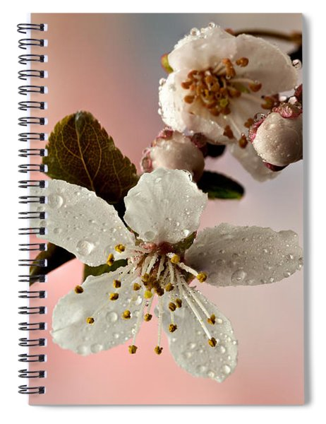 Announcing Spring Spiral Notebook