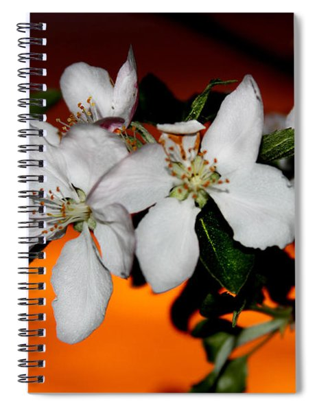 Apple Blossom Sunrise I Spiral Notebook